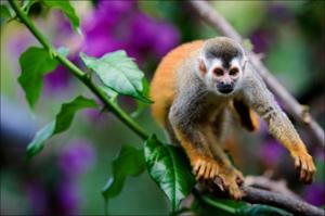 Consejos de bienestar para Viajar a Costa Rica