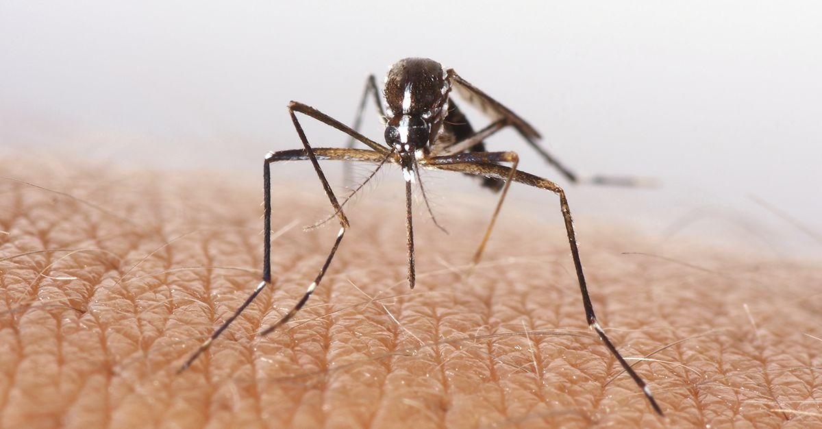 Dengue fever is a notably prevalent disease among travellers.