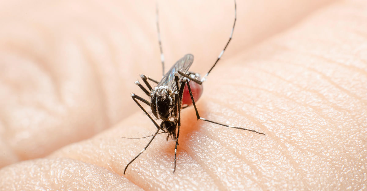 Dengue mata a miles cada ano, pero la vacuna lo cambiara.