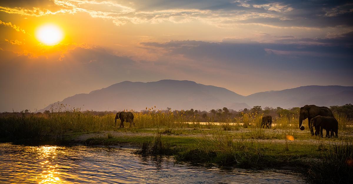 Los elefantes en Zambia hacen al país un destino atractivo. Asegúrate de visitar Zambia de forma segura con las vacunas de viaje y los consejos de Passport Health.