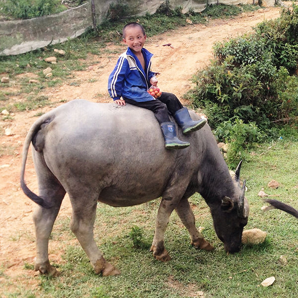 Boy riding animal