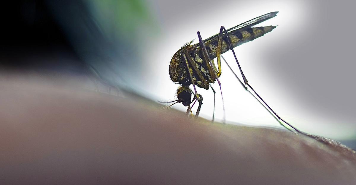 Les moustiquaires et les médicaments antipaludéens sont des clés pour prévenir la malaria.