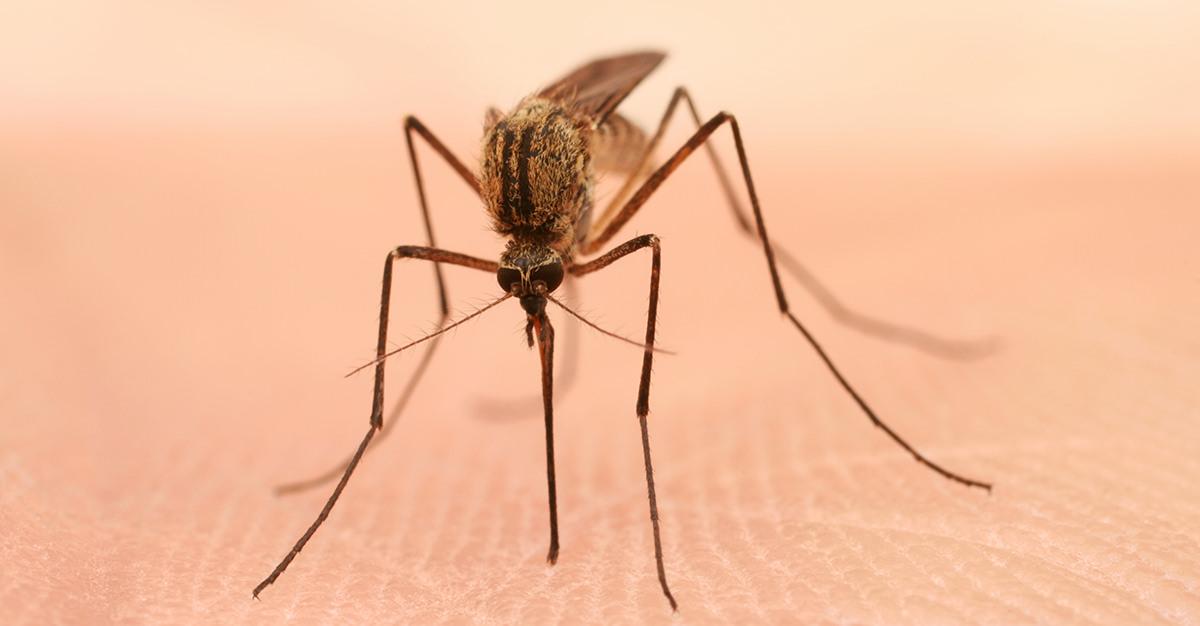 La prévention contre le virus Zika est difficile.