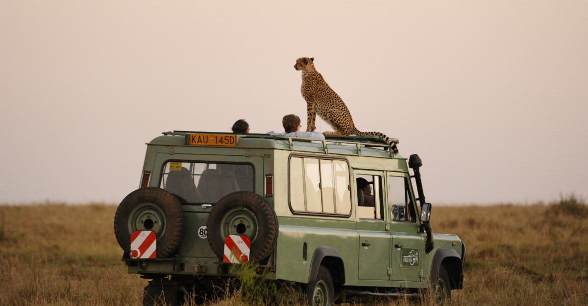 Many of the world's most wild animals can only be seen up-close-and-personal on an African safari.