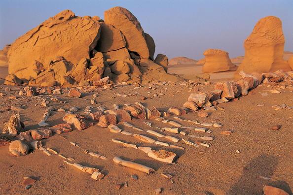 Wadi Al-Hitan o el Valle de las ballenas