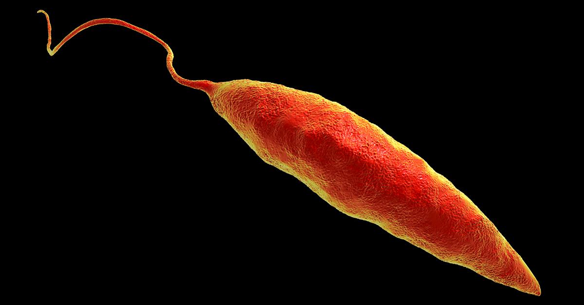 Leishmaniasis cutánea clásica