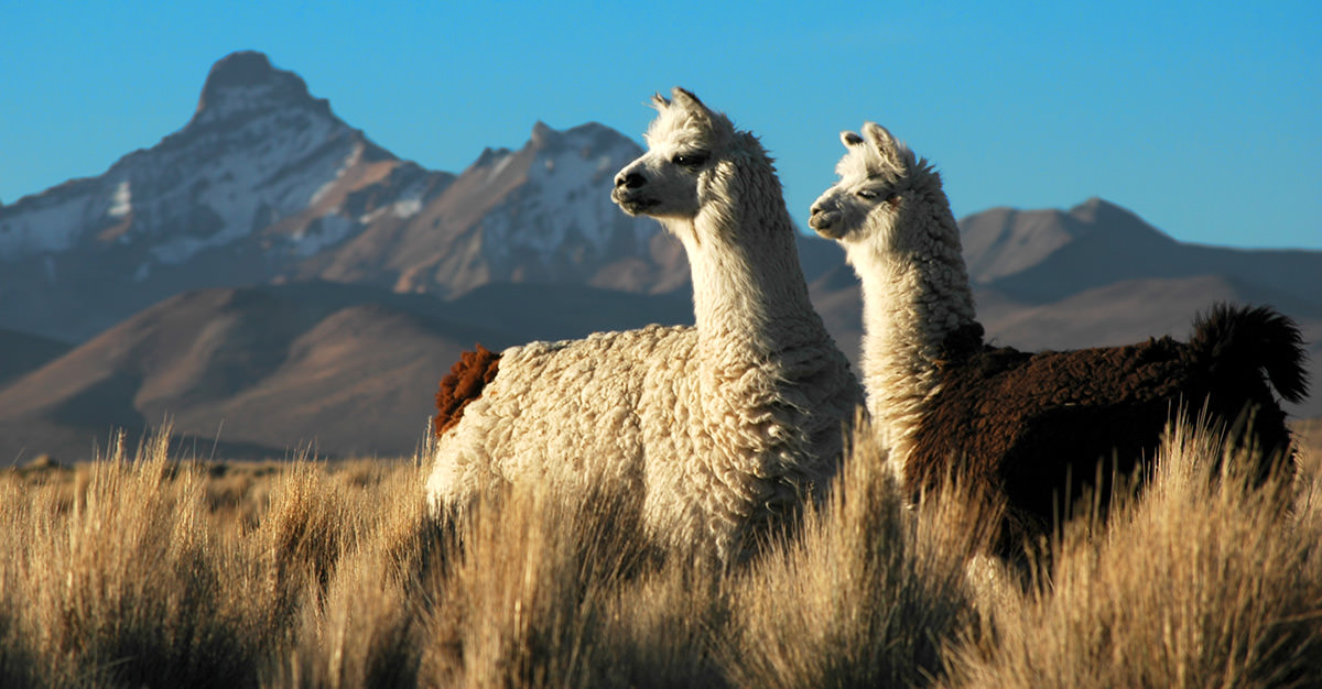 Bolivia's wide-ranging environment has lots to offer all kinds of travellers.
