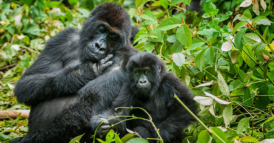 DR Congo has a wide variety of animal life and tourist activities.