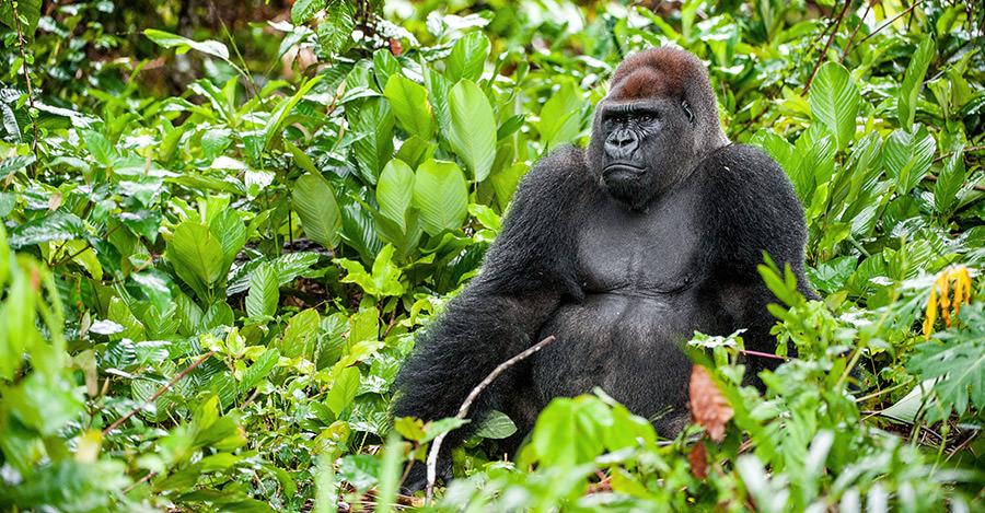 Gabon travel destination advice