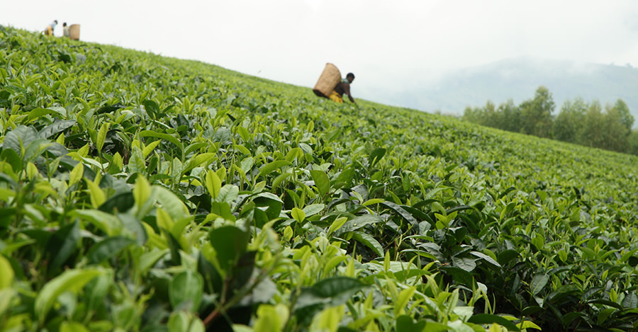 Malawi is a popular destination especially its agricultural regions.