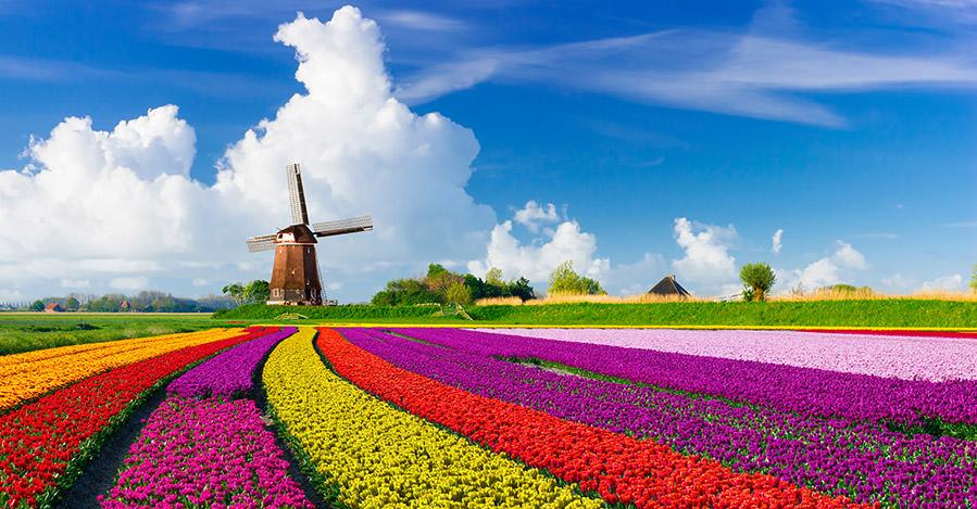 Los Países Bajos tienen muchas áreas urbanas y rurales que explorar. Asegúrate de explorarlos de forma segura con las vacunas de viaje y los consejos de Passport Health.