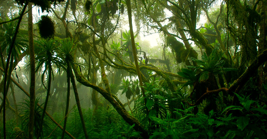 Congo's jungles are known for their gorillas and other wildlife.