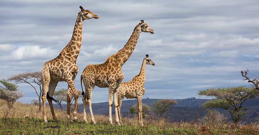 From safaris to huge cities, South Africa has so much to experience.