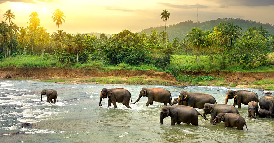Sri Lanka has much to offer travellers.