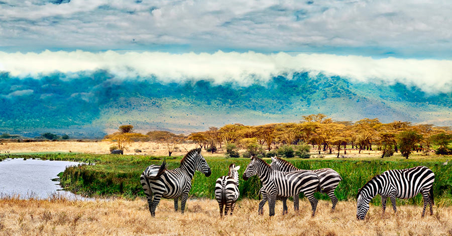 Uganda offers safaris, wildlife and more to travellers.