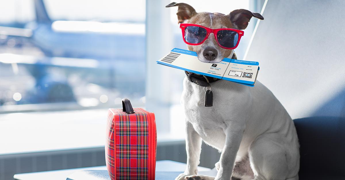 ¿Viajarás con tu mascota en avión?