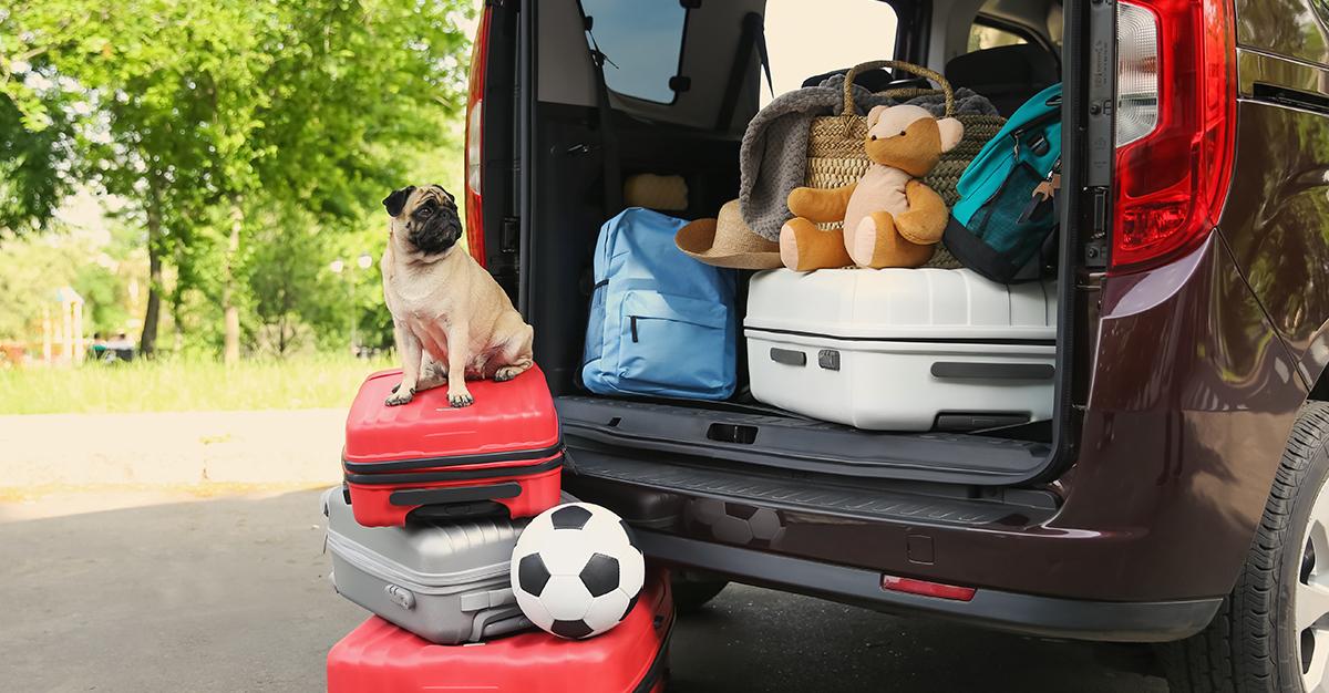 ¿Viajarás con tu mascota en auto?