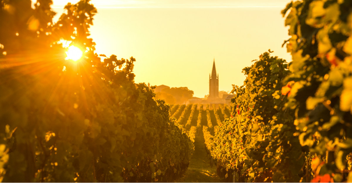 Culinary tours in French often include a trip through local vineyards.