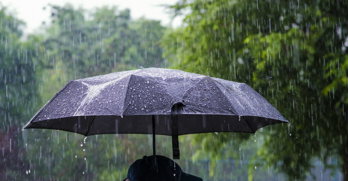 Rain can help spread a virus across the world.