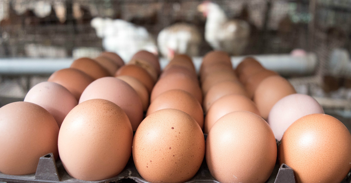 A tainted egg farms has helped spread salmonella to nine states.