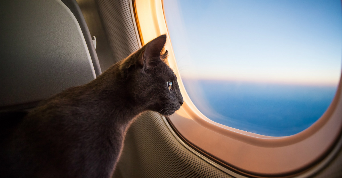 A cruise might be more difficult to handle with a pet than a long flight.