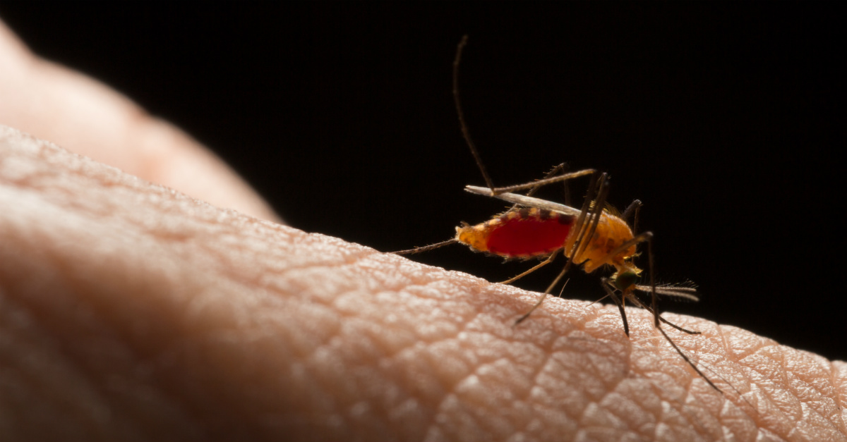 A fast track from the FDA creates hope for a chikungunya vaccine.