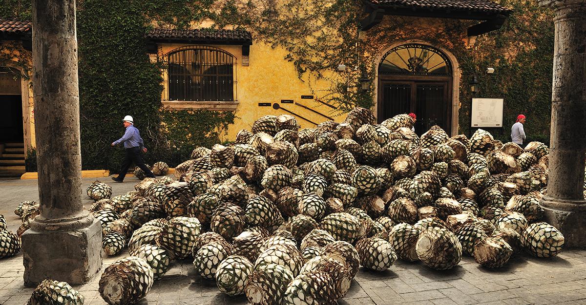 Las mejores excursiones en Guadalajara