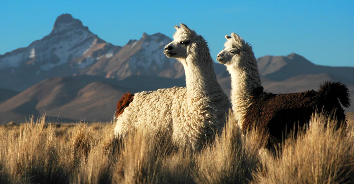 La Bolivie présente un environnement diversifié et offre de nombreux sites à visiter pour toutes sortes de voyageurs. Assurez-vous de les explorer en toute sécurité grâce aux vaccins et aux conseils de voyage de Passport Health.