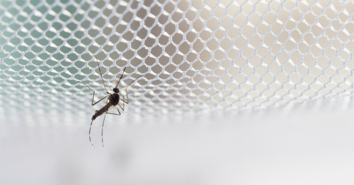 West Nile cases pop up across the United States during the summer.