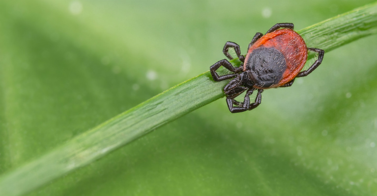 New ticks and tickborne diseases are spreading in the United States.