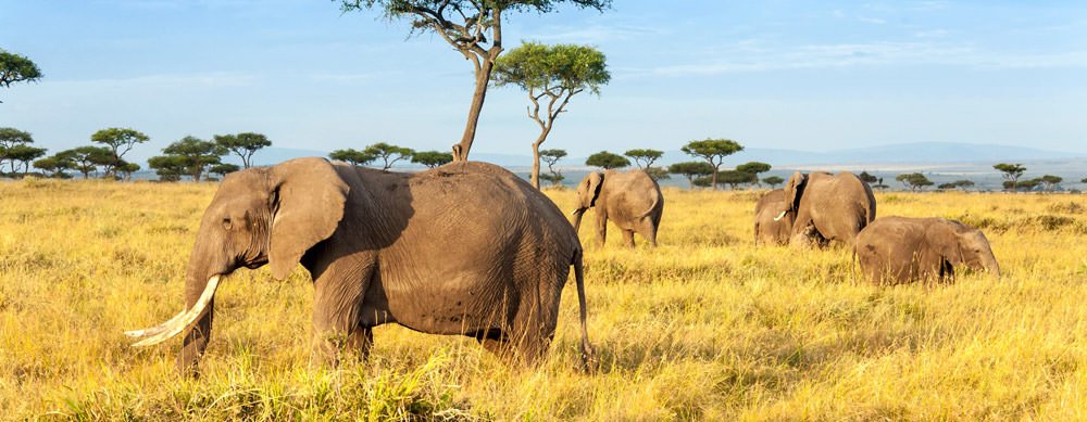 Travel safely to Kenya with Passport Health's travel vaccinations and advice.
