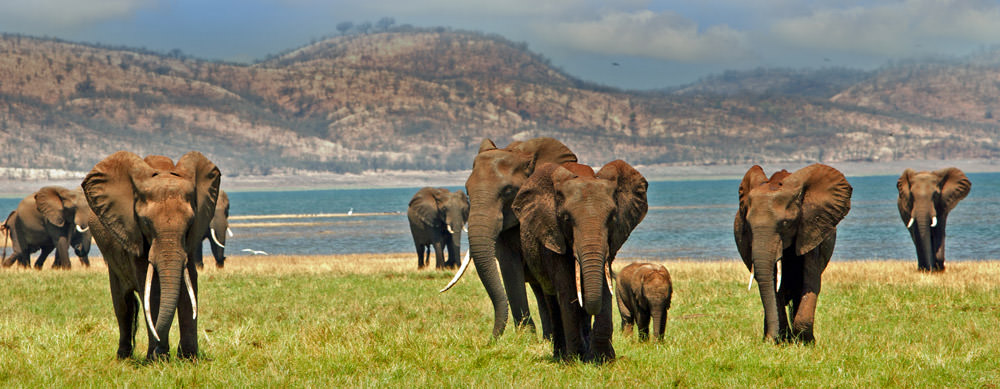 Travel safely to Zimbabwe with Passport Health's travel vaccinations and advice.