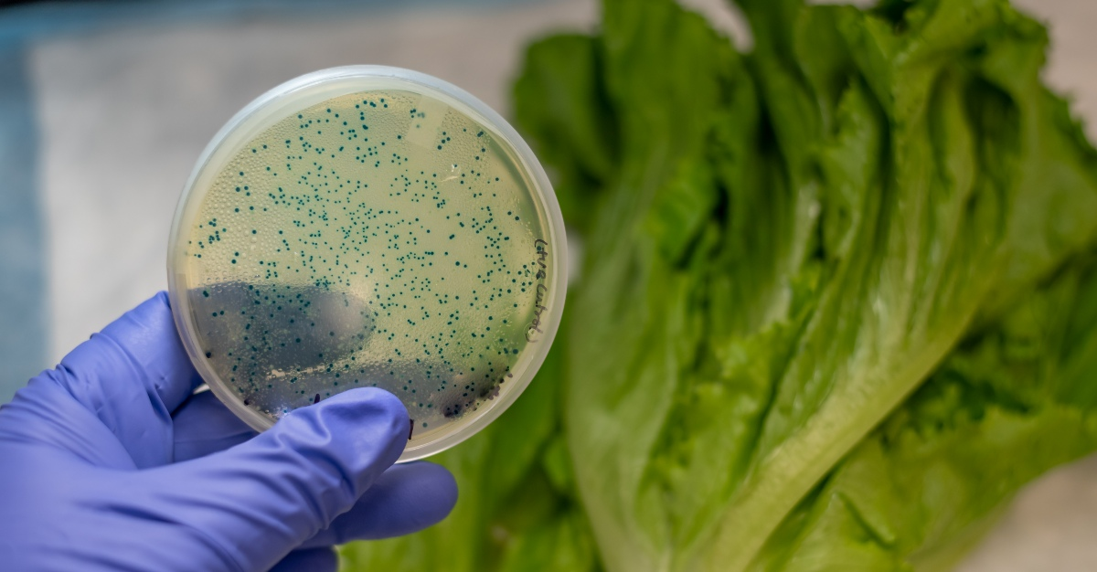 You may be able to buy romaine lettuce, but it might not be safe yet.