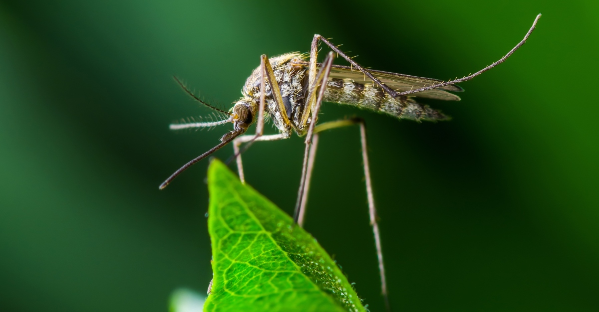 Researchers are looking into mosquito saliva to create a universal vaccine.