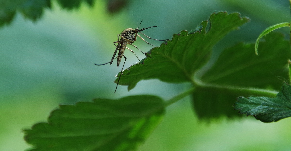 Climate changes is allowing mosquito-borne diseases to reach new parts of Europe.