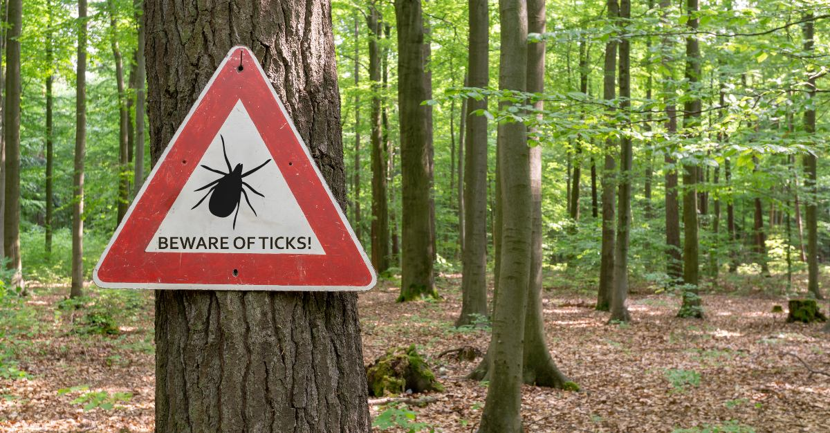 A dangerous form of Lyme disease without treatment poses a risk to the United States.