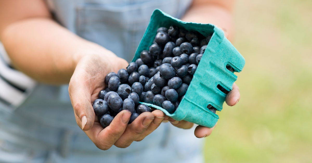 Blueberries are rich in antioxidants that aid the immune system.