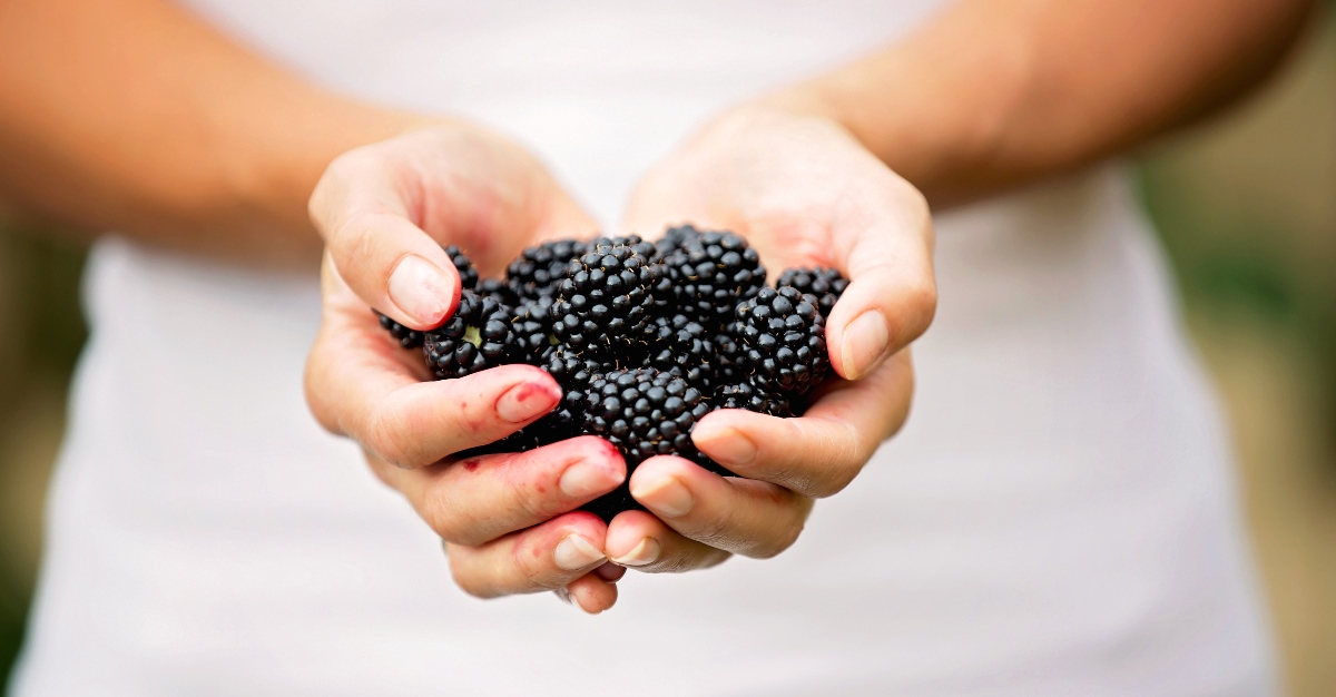 Blackberries are one source of the many hepatitis A cases in the United States.