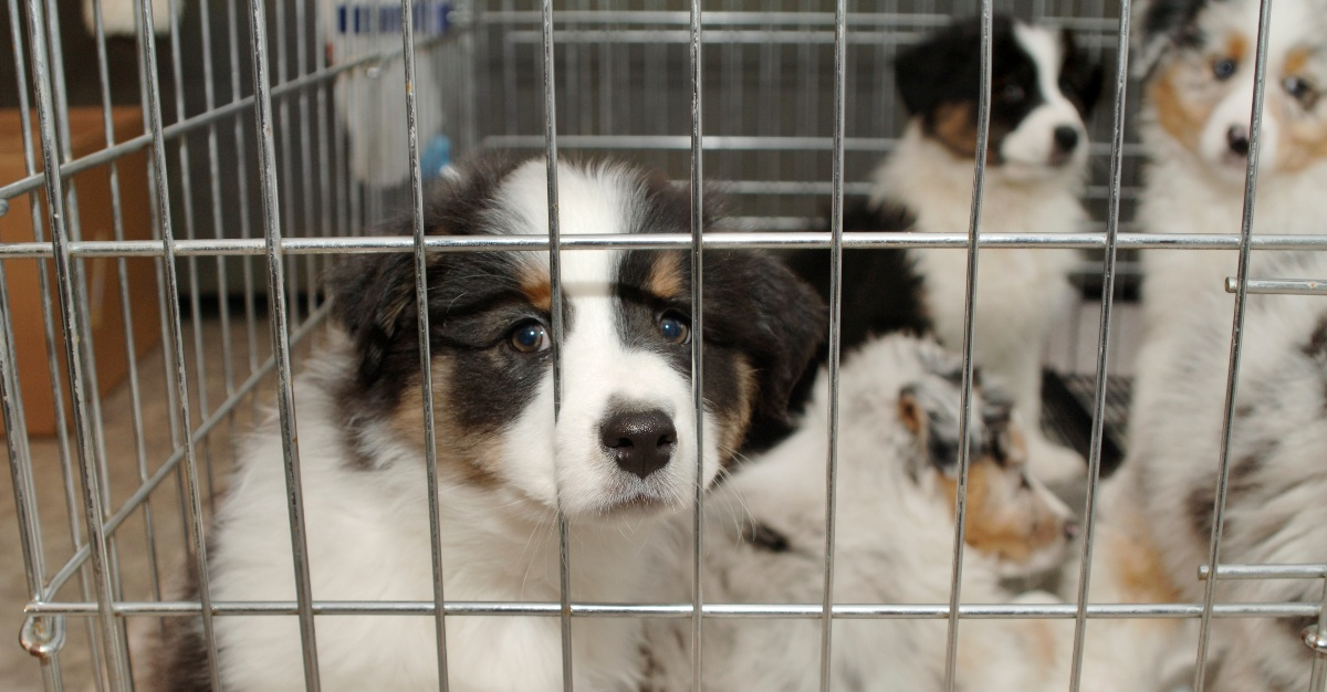 A chain of pet stores appears to be the source of a bacteria outbreak across 13 states.